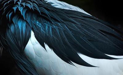 Feathered by Joe Colavita - Judge's Selection 2018-2019