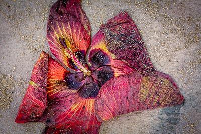 Waikiki Walkway Blossom by Rich Fiedorowicz