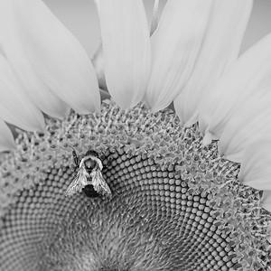 1. Bee-utiful