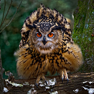 Eurasian Eagle Owl by Gary Emord - Judge's Selection 2018-2019