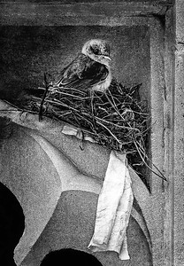 Skilled Nest Builder