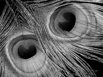 eyes by Linda Harris