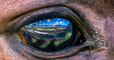 Equine Reflection by Paul Motise