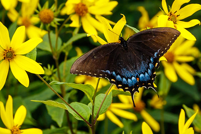 Butterfly at Pisgah by Patsy Howard