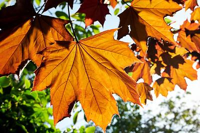 Sam Keegan: Leaves