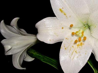 Jean Crowley: Pollen Count