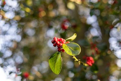 John Carroll: Berries