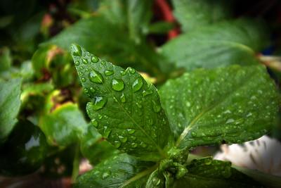 Seán Mooney: Raindrops Leaf