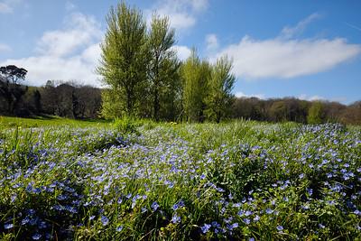 Sam Keegan: Bluebells
