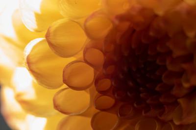 John Carroll: Flower Buds