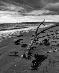 Brenda Larby: Dollymount Beach