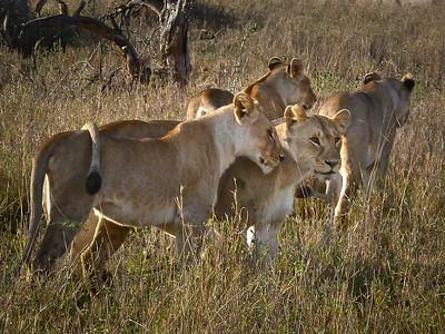 Photo 3 by Kathy D: Serengeti