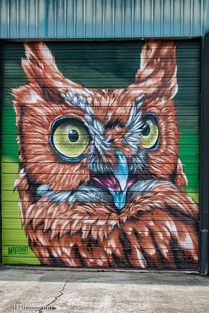 12-Owl_3154