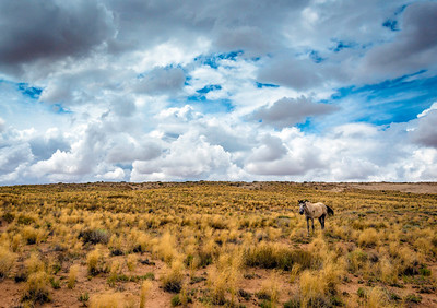 Navajo-reservation-Southwest-Arizona-horse-clouds-landscape-locations-Tony-Marinella