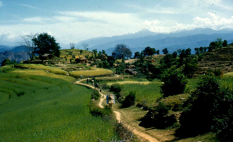 An easy walking trail through  terraced wheat fields and villages