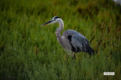 Bolsa Chica Wetlands Sunrise Shoot - 8/20/18