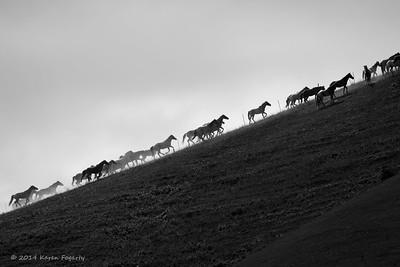 Return to Freedom American Wild Horse Sanctuary - Feb/April 2014