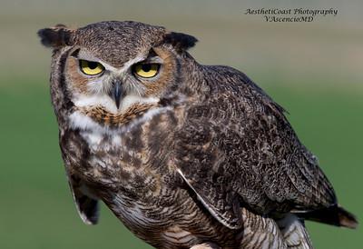 Hawk Watch Outing 2-7-2015
