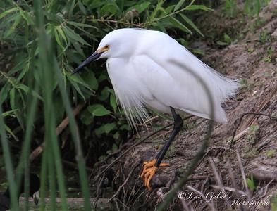 Sea and Sage / San Joaquin Bird and Wildlife  Sanctuary -4/18/15