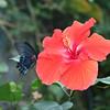 Alan P Butterfly Conservatory - 17