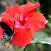 Butterfly2 - Jan