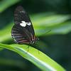 Alan P Butterfly Conservatory - 21