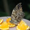 Alan P Butterfly Conservatory - 16