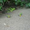 Alan P Butterfly Conservatory - 19