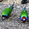 Birds1 - Jan