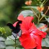 Butterfly1 - Jan
