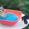 Alan P Butterfly Conservatory - 20