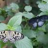 Alan P Butterfly Conservatory - 13