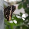 Alan P Butterfly Conservatory - 9