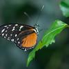 Alan P Butterfly Conservatory - 14
