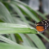 Alan P Butterfly Conservatory - 7