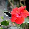 Butterfly4 - Jan