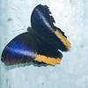 Alan P Butterfly Conservatory - 22