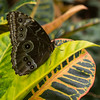 Alan P Butterfly Conservatory - 8
