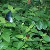 Alan P Butterfly Conservatory - 15