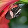 Alan P Butterfly Conservatory - 18