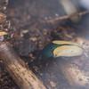 Alan P Butterfly Conservatory - 10