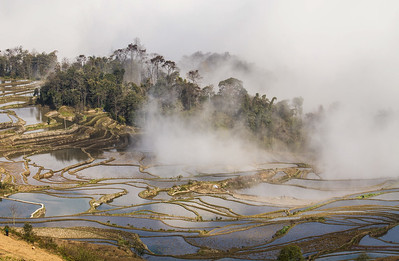 Sheila Wertheimer - Mercy Center,After Sunrise Rice Terraces Yuanyang China,200.00,16x20