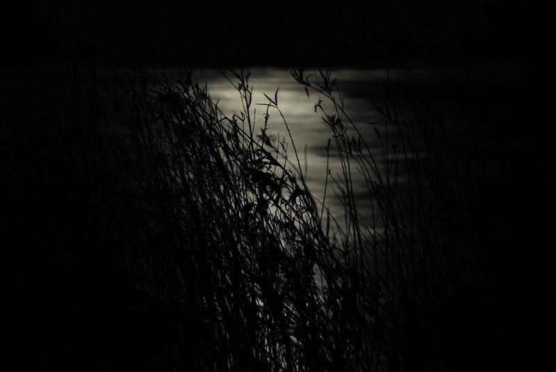 ©Bob Sadowy
