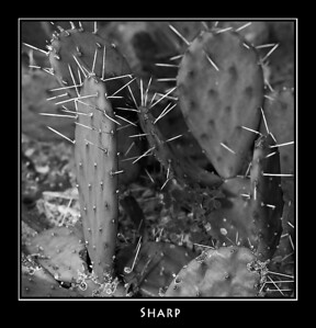 Sharp ©John Green