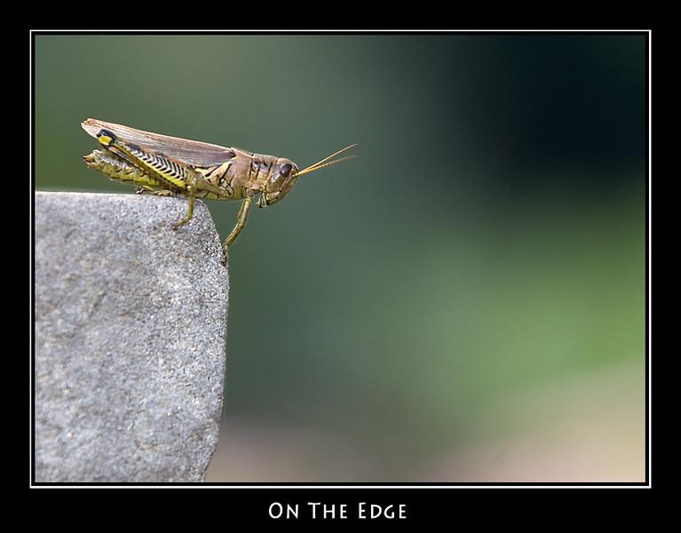 On the Edge ©John Green
