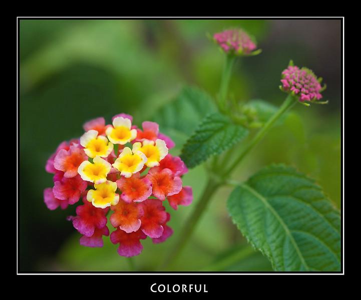 Colorful ©John Green