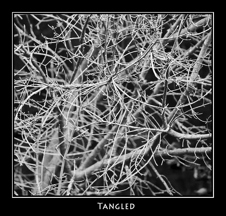 Tangled ©John Green