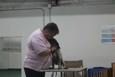 Paula Barras Workshop