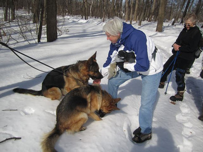 We met a dog owner whose 2 german shepherds were delighted to meet Gen and her dog cookies.