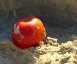 Beach Snack_Wendy Fox_Food we Eat